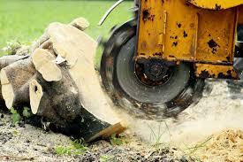 Tree Stump Grinding Sturminster Newton Dorset